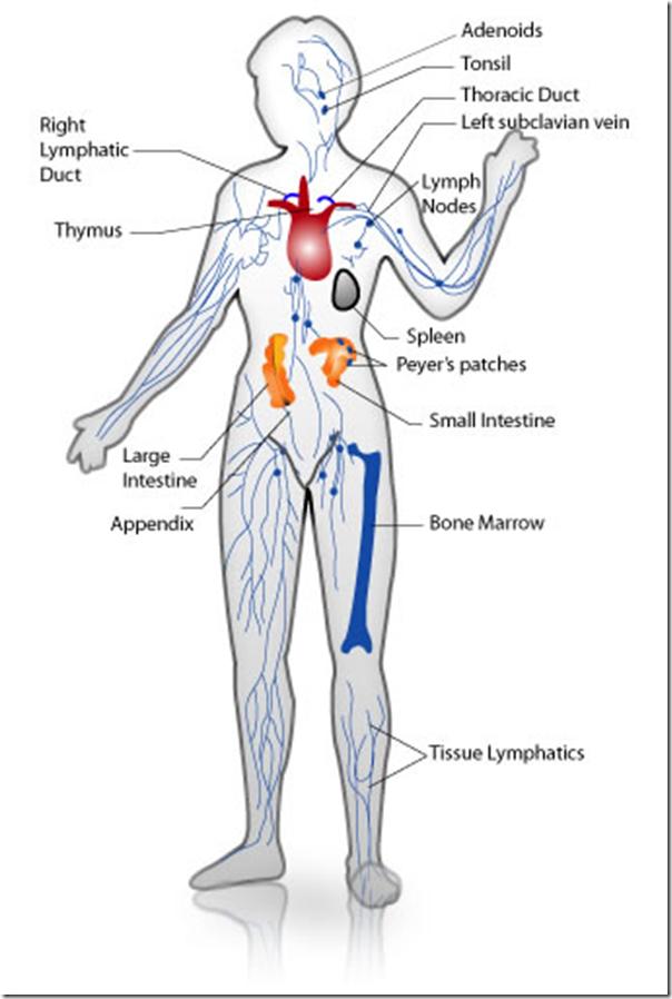 immune_system